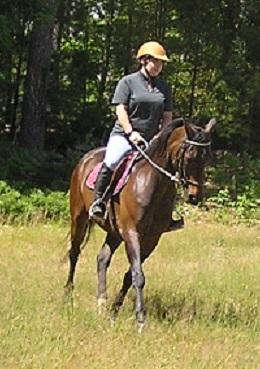 Morgan Horses For Sale At Menomin Morgan Farm